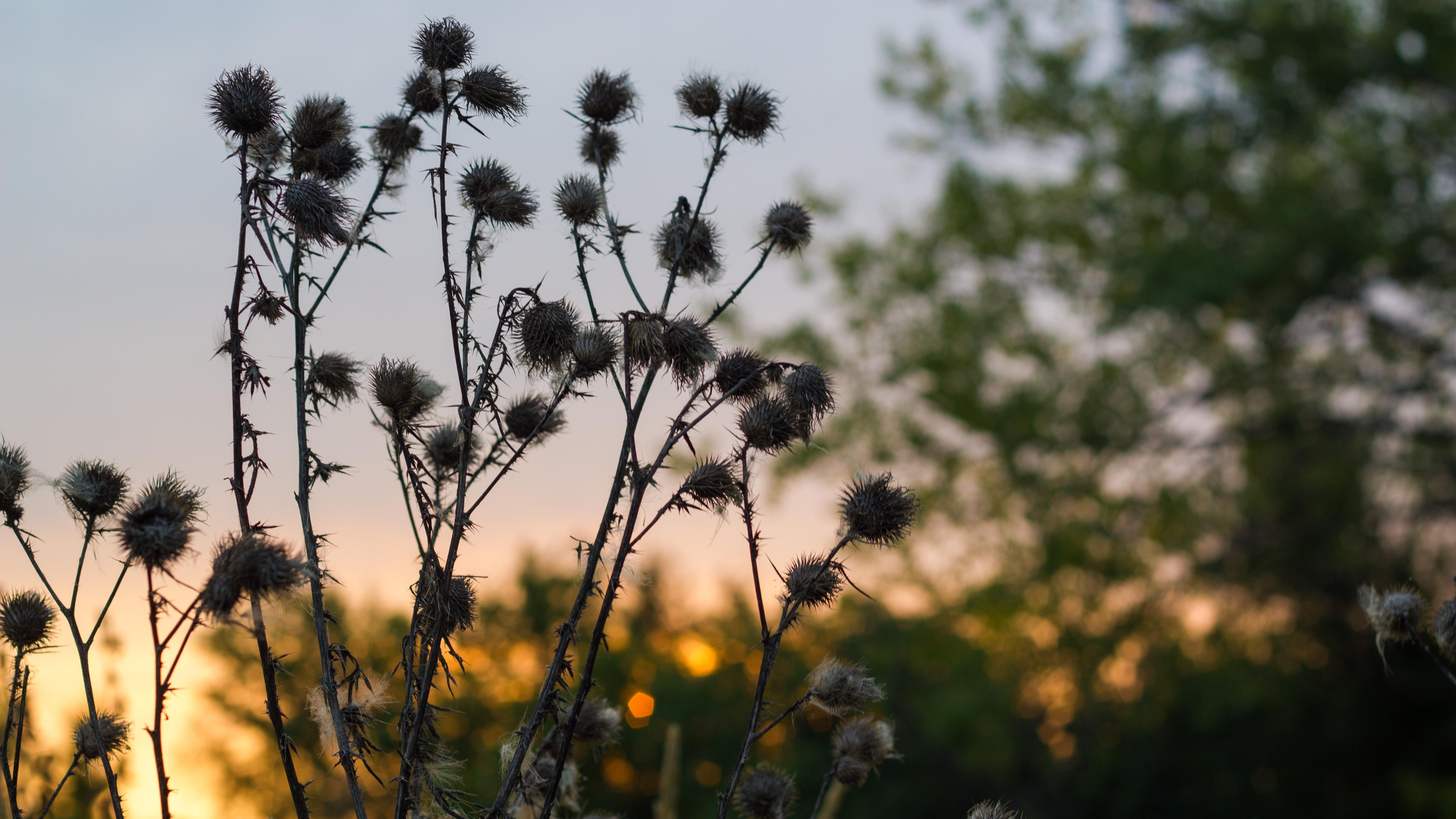 Flowers in Sunrise
